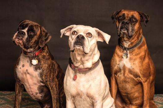 CBD bei Hunden